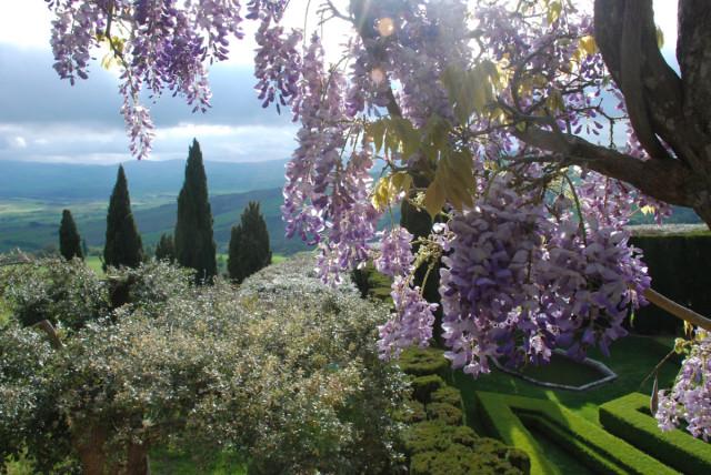Garden Tour at La Foce wisteria and cypress | tiny farmhouse