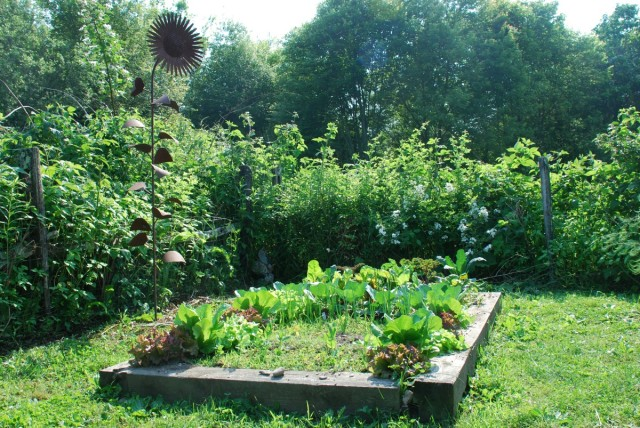 This Week in the Garden mid-June raised bed with greens | tiny farmhouse