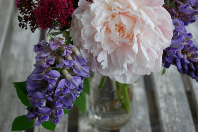 this week in the garden end of June - peonies and wisteria | tiny farmhouse