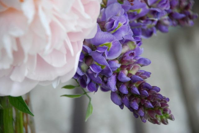 this week in the garden end of June - wisteria blooms | tiny farmhouse