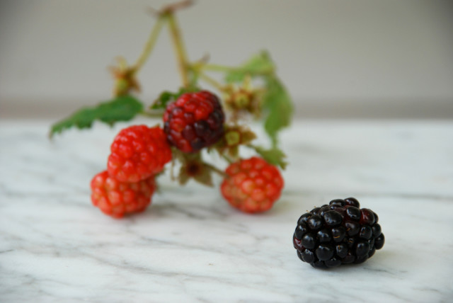 tips-for-harvesting-blackberries | tinyfarmhouse