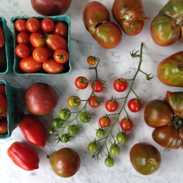 this week in the garden - end of August: tomato harvest | tiny farmhouse