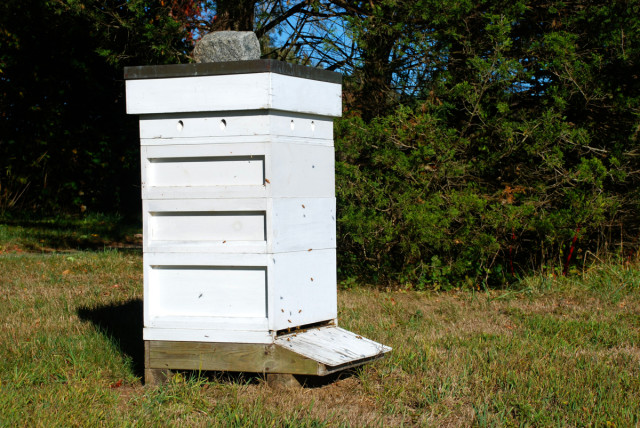 bee-hive-for-Whole-Kids-Foundation | tiny farmhouse