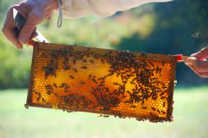 Preparing for the Honey Harvest