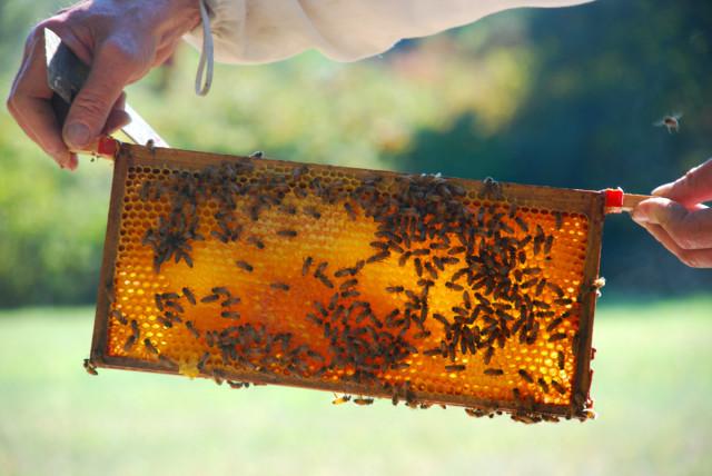 Preparing-for-honey-harvest 1 | tiny farmhouse