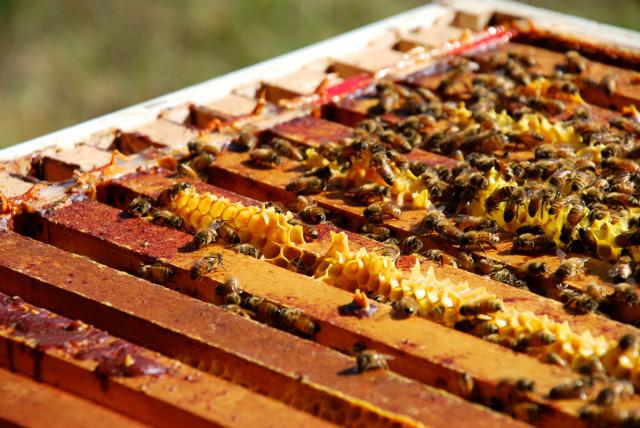 Preparing-for-honey-harvest 3 | tiny farmhouse