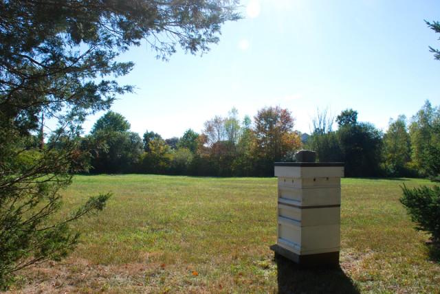Preparing-for-honey-harvest 4 | tiny farmhouse