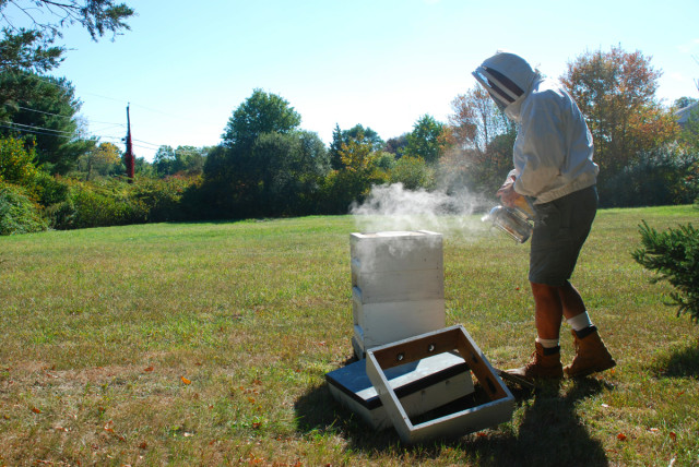 Preparing-for-honey-harvest 5 | tiny farmhouse