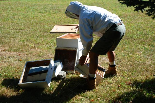Preparing-for-honey-harvest | tiny farmhouse