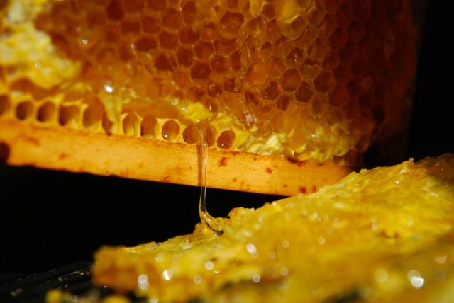 the-honey-harvest | tiny farmhouse