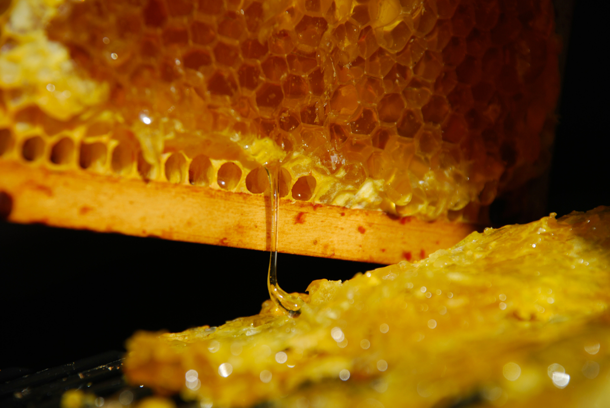 The Honey Harvest
