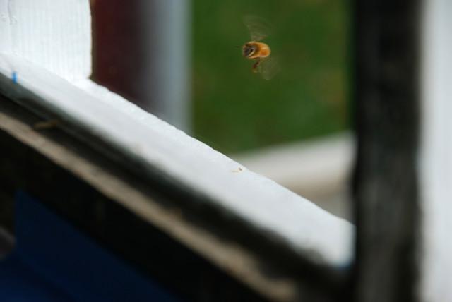 the-honey-harvest-bee-flying | tiny farmhouse