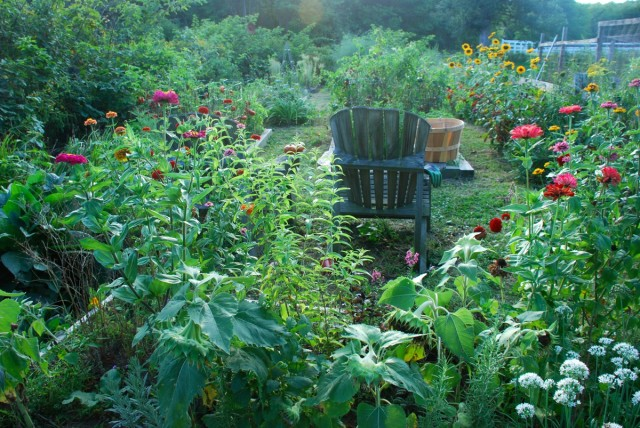 this-week-in-the-garden-early-January-summer-garden   tiny farmhouse