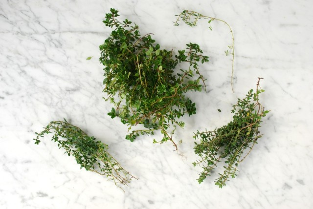 break your thyme bunches up into individual stems, place them in a dry spot, and in a week or so, you'll have dry thyme with more flavor than most jarred herbs.