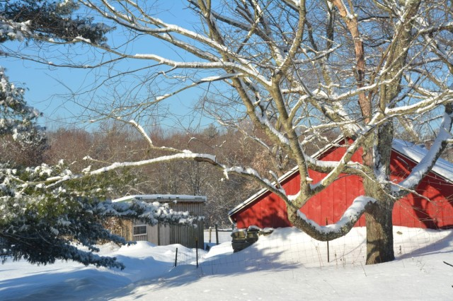 this-week-in-the-garden-late-March 2015 snow | tiny farmhouse