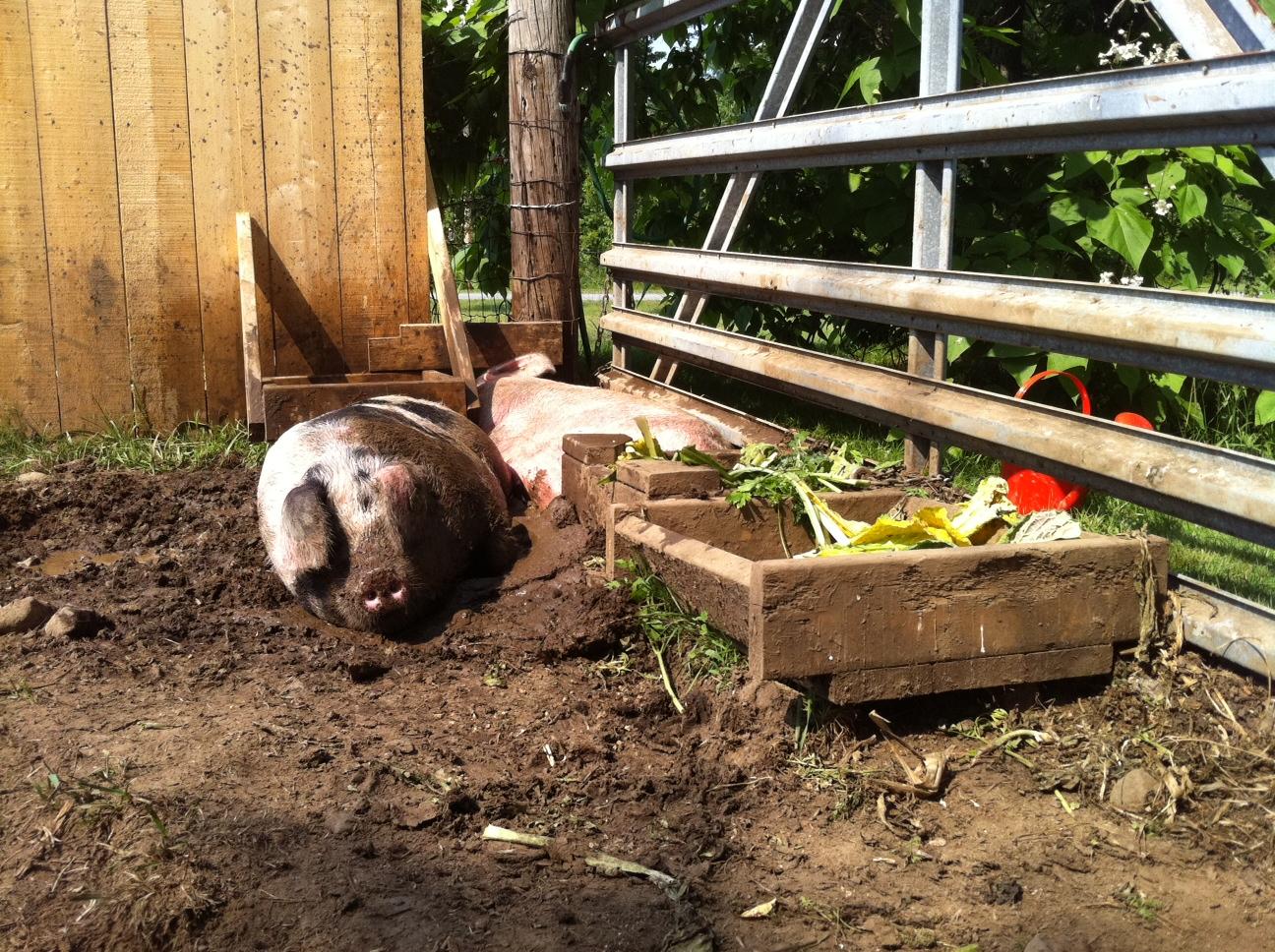 farm life tiny farmhouse