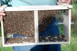 Honey Bees Pooh Bear-style